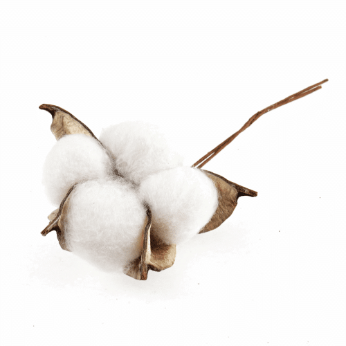 Occasions - Cotton Plant on Wire 2